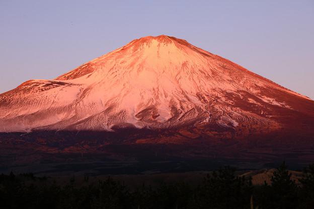 新春紅富士