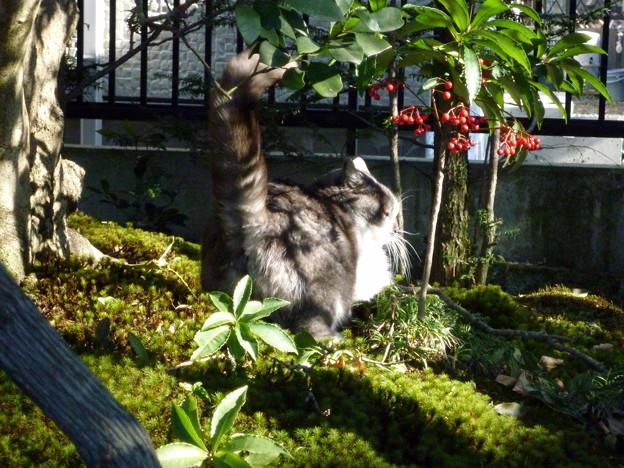 茂みを探索する猫