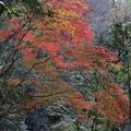 Photos: 赤目渓谷