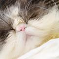 写真: 眠ったらぶ~ちゃん3