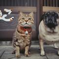 写真: 岩合さんの写真展を観てきました。