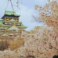 Photos: 大阪城の桜