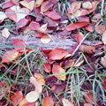 写真: 弓削島中崎公園