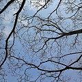 写真: 木蓮、森の交流センター