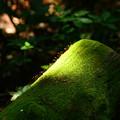 1万年前の原生林