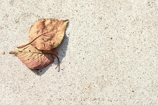 落葉の存在