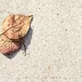 Photos: 落葉の存在
