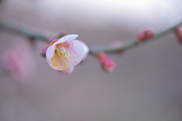 Photos: 違う品種も咲き始めました