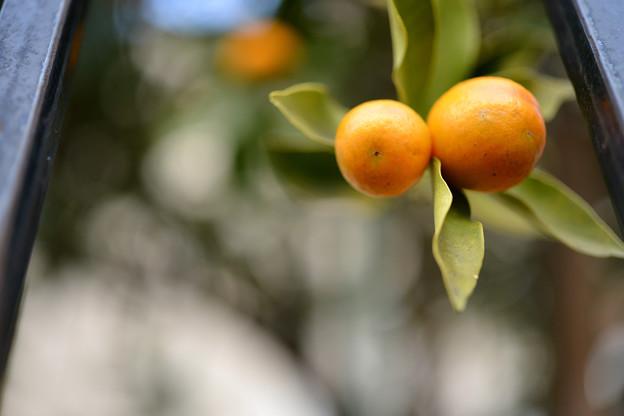 Photos: オレンジロード