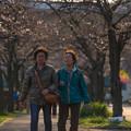写真: 老人&櫻