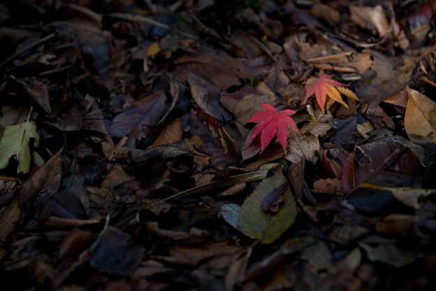 地元の紅葉 (5)