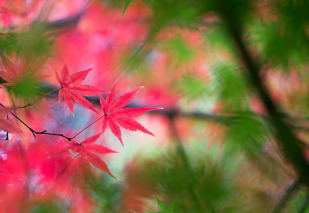 地元の紅葉 (4)