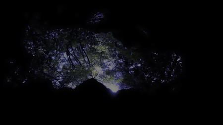 樹海_夜の帳