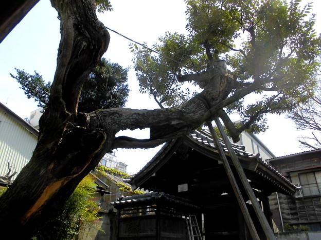 写真: 善福寺-02山門b