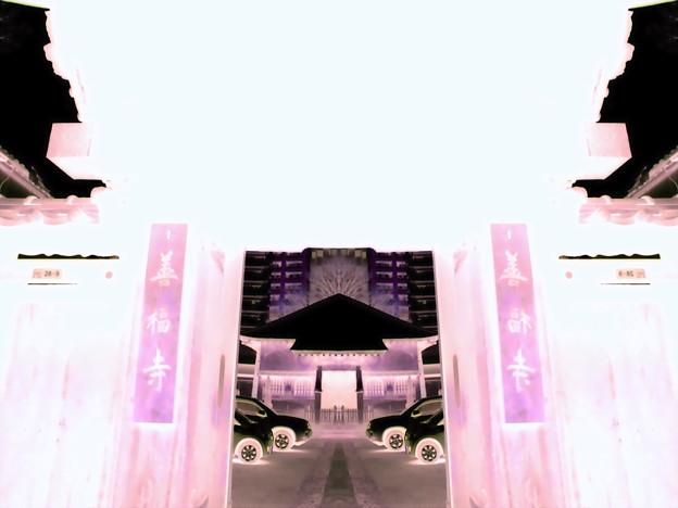 善福寺-01山門a(1-4e)