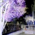 写真: 本照寺-04墓地b(2)