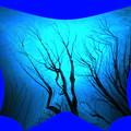 写真: 裸木-02a