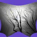 写真: 裸木-01a
