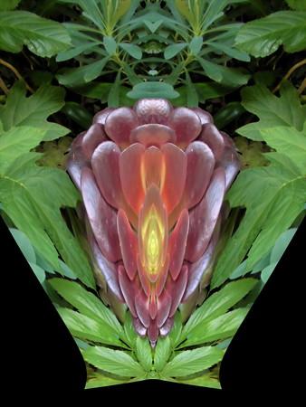 花が呼んでいる-02