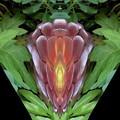 写真: 花が呼んでいる-02
