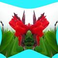 カンナの花-02a