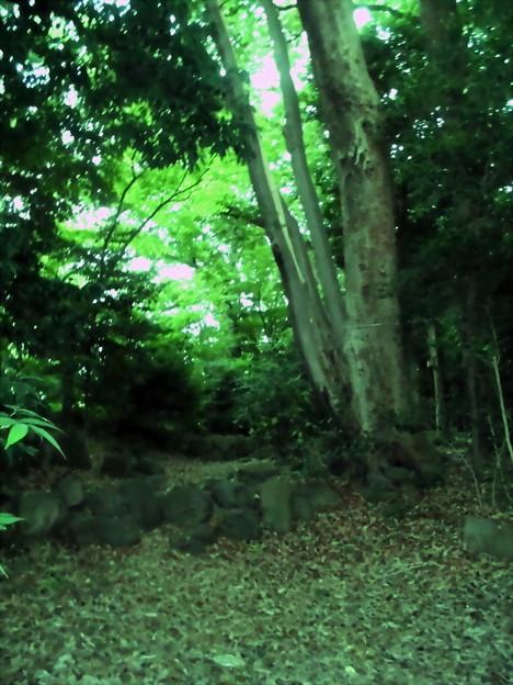 世田谷区_桜丘すみれば自然庭園-08