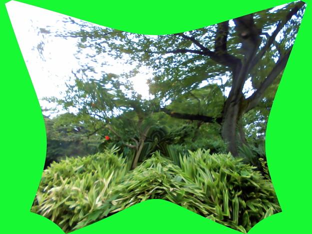 世田谷区_桜丘すみれば自然庭園-03b