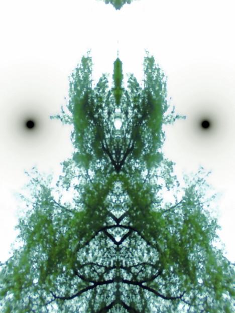 世田谷区_桜丘すみれば自然庭園-02b(4-1)_木霊