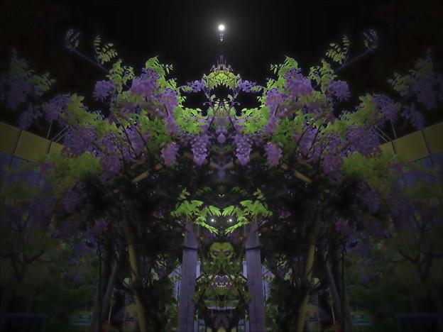 藤棚の夜-05b