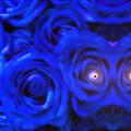 写真: 青い薔薇-04b(2)