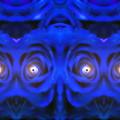 写真: 青い薔薇-04b(3)