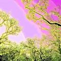 Photos: 春の息吹-01b