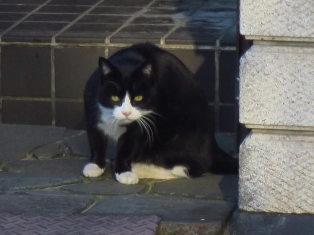 _180115 058 黒白はちわれ猫