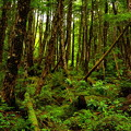 写真: 白駒池原生林