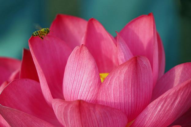 写真: 艶陽天と蜂
