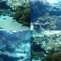 写真: 美ら海水族館3