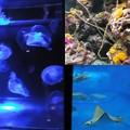 写真: 美ら海水族館5