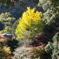 写真: 行道山