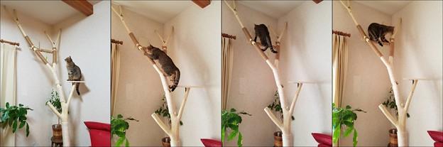 すずたろう室内登り木