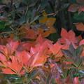 木陰にも秋