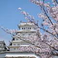 写真: 櫻之花。?路城