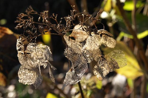 2-冬支度の花後の葉