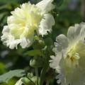 優しく元気な花