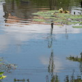 小さな池の水面