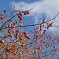 野鳥の熟柿楽園