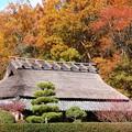 里の晩秋風景09