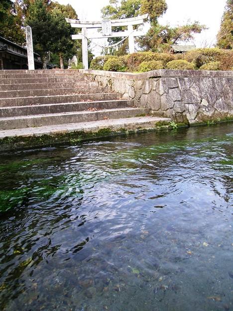 針江の生水03