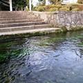 写真: 針江の生水03