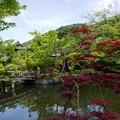 放生池:新緑の永観堂23