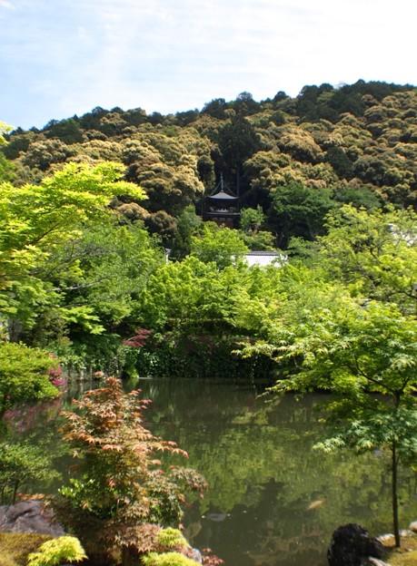多宝塔を望む:新緑の永観堂26